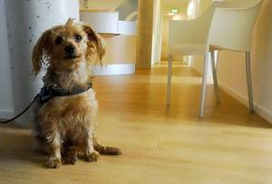 Kleiner süßer Hund sitzend